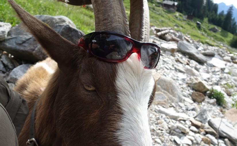 Tag 32: Biasca – Alpe di Pontima