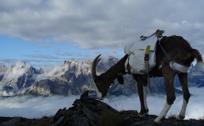 Tag 71: Demutspitz – Rosskopftörl – Tscharrhütte
