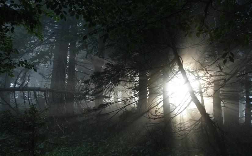 Tag 112: Gippel – Perschkogel – Waldfreundehütte